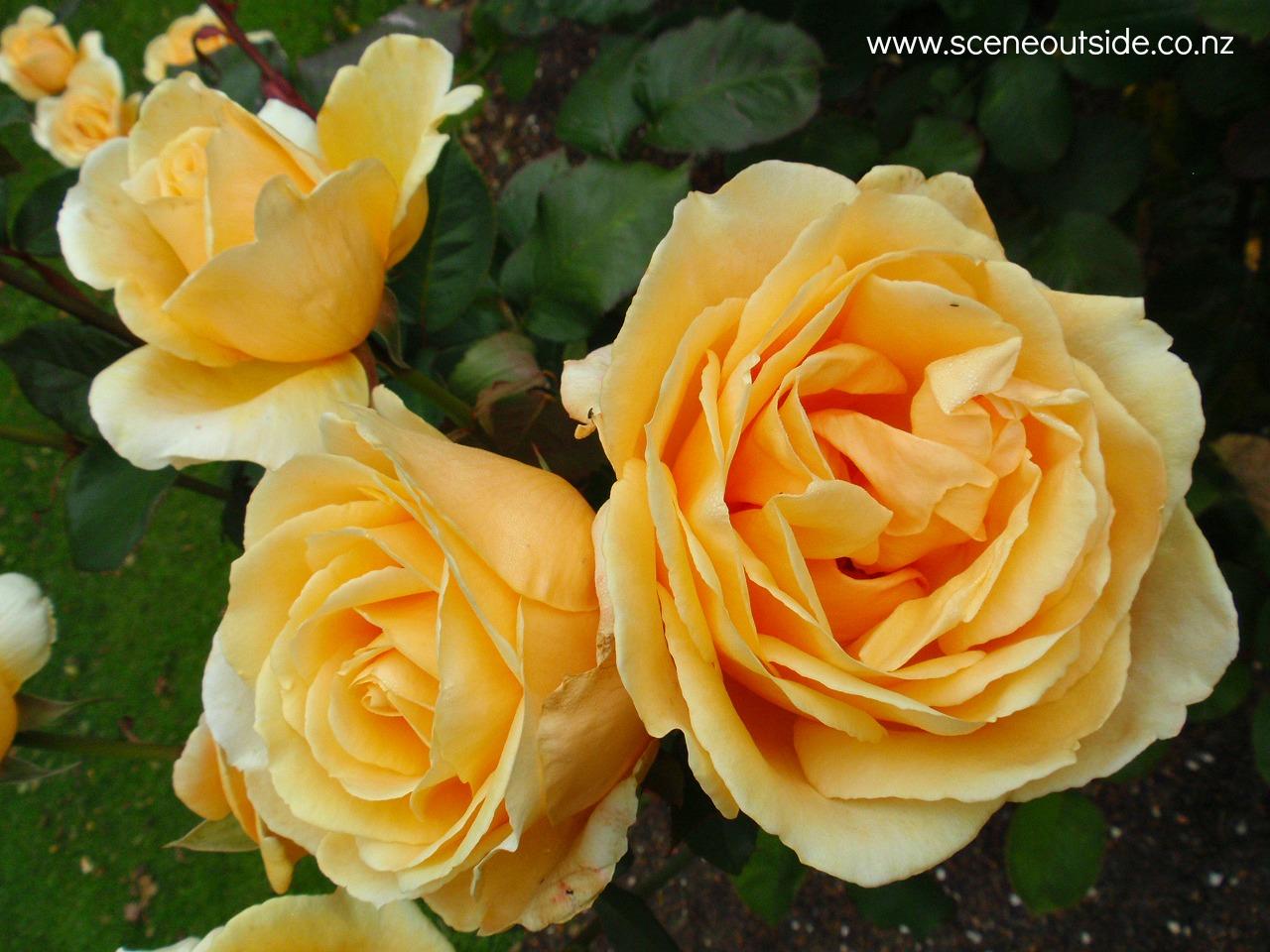 About Garden Design Rosa Valencia